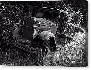 Ford Plant Canvas Print - Old Model T Ford In The Jungle Maui Hawaii by Edward Fielding