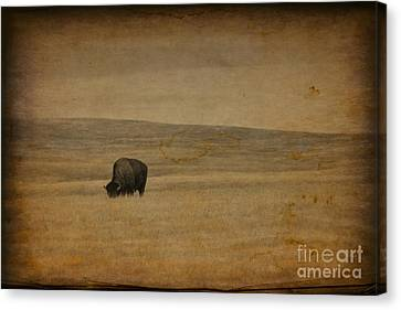 Western Themed South Dakota Bison  Canvas Print