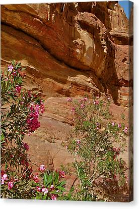 Oleander Along Trail From The Monastery In Petra-jordan Canvas Print by Ruth Hager