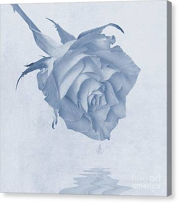 One Drop Of Love... Canvas Print by John Edwards