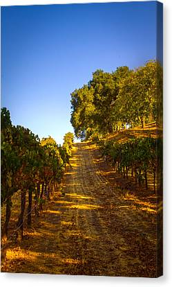 Opolo Winery Canvas Print by Bryant Coffey