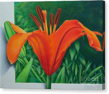 Orange Lily Canvas Print by Pamela Clements