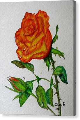 Orange Rose Canvas Print by Zina Stromberg