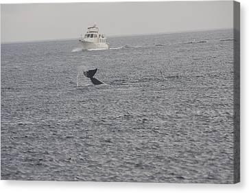 Orca - 0008 Canvas Print