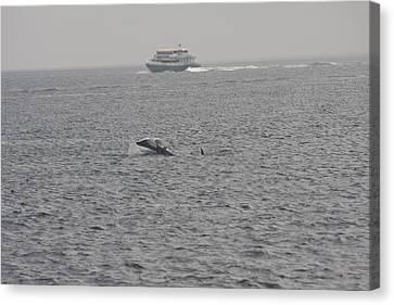 Orca - 0009 Canvas Print