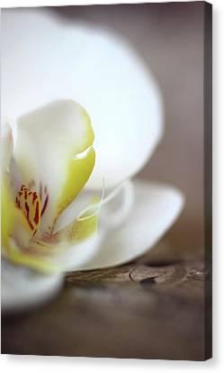 Orchid Canvas Print by AR Annahita