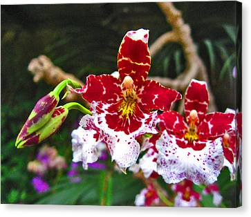 Orchid. Canary Islands. Canvas Print by Andy Za