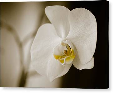 Orchid Canvas Print by Ivelin Donchev