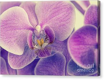 Orchid - Lilac Dark Canvas Print by Hannes Cmarits