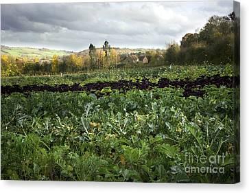 Organic Farming Canvas Print by Dr. Keith Wheeler