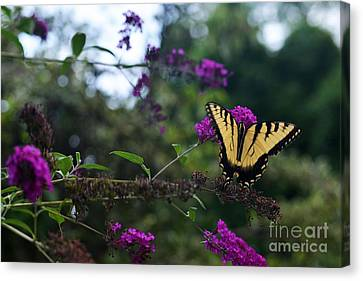 Canvas Print featuring the photograph Out Of Bounds II by Judy Wolinsky