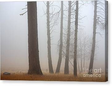 Out Of The Fog Canvas Print by Mike  Dawson