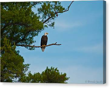Canvas Print featuring the photograph Out On A Limb by Brenda Jacobs