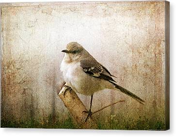 Canvas Print featuring the photograph Out On A Limb by Yvonne Emerson AKA RavenSoul
