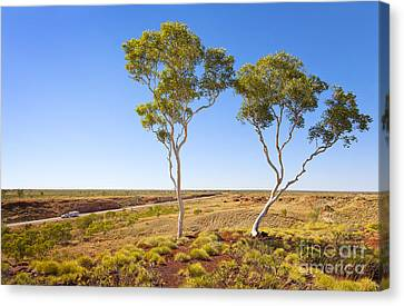 Outback Australia Ghost Gums Canvas Print by Colin and Linda McKie