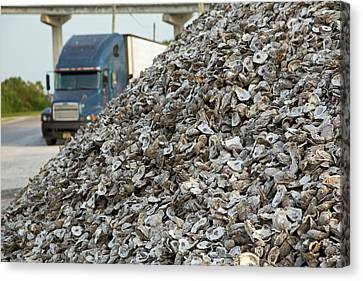 Oyster Shells After Processing Canvas Print