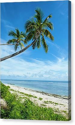 Tonga Canvas Print - Palm Fringed Kolovai Beach, Tongatapu by Michael Runkel