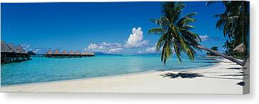 Palm Tree On The Beach, Moana Beach Canvas Print by Panoramic Images