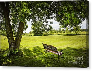 Park Bench Under Tree Canvas Print by Elena Elisseeva