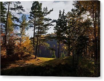 Path In Autumn Light Canvas Print by Bogdan M Nicolae