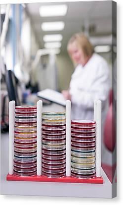 Pathology Canvas Print - Pathology Lab by Aberration Films Ltd