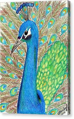 Peacock Canvas Print by Carol Hamby