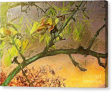 Pear Tree In The Sunset Canvas Print by Odon Czintos