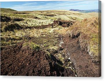 Subsoil Canvas Print - Peat Hags On King Bank Head by Ashley Cooper