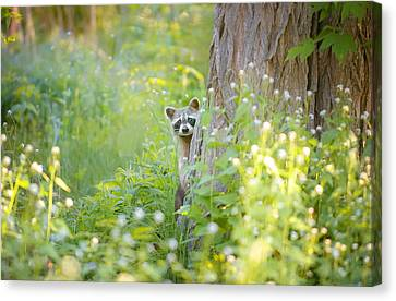 Peek A Boo Canvas Print by Carrie Ann Grippo-Pike