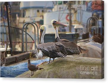 Pelican Duo Canvas Print by Donna Greene