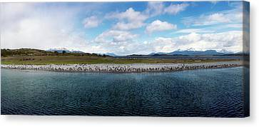 Penguins On The Beagle Channel Canvas Print by Panoramic Images