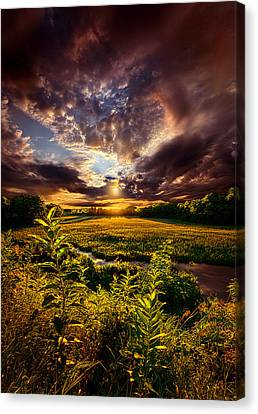 Perspective Canvas Print by Phil Koch