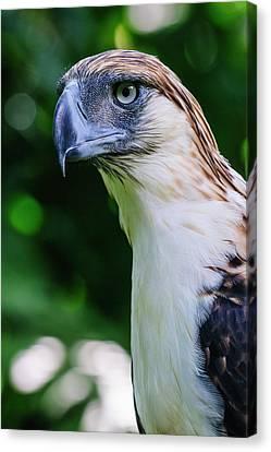 Philippine Eagle (pithecophaga Jefferyi Canvas Print by Michael Runkel