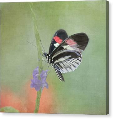 Pompano Canvas Print - Piano Key Butterfly by Kim Hojnacki
