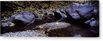 Pilot Creek In Autumn, Humboldt County Canvas Print by Panoramic Images