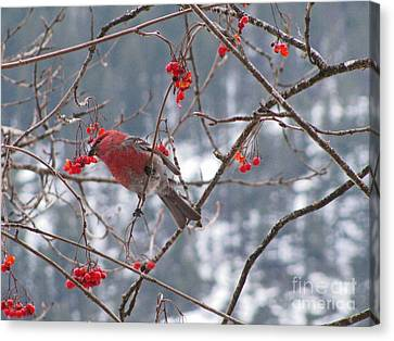 Pine Grosbeak And Mountain Ash Canvas Print by Leone Lund