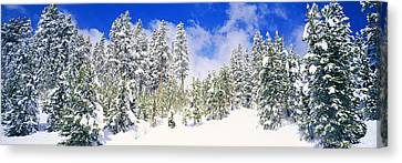 Pine Trees On A Snow Covered Hill Canvas Print