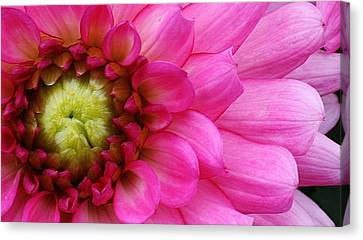 Pink Beauty Canvas Print by Bruce Bley