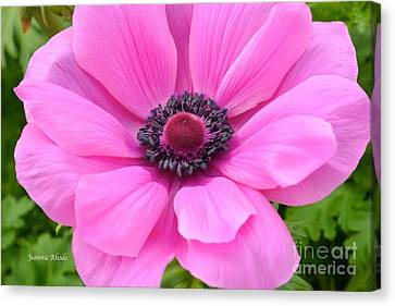 Canvas Print featuring the photograph Pink Flower by Jeannie Rhode