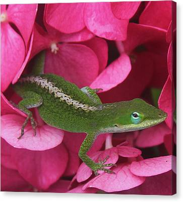Pink Hydrangea And Lizard 2 Canvas Print