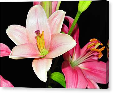 Canvas Print featuring the photograph Pink Lilies by Lula Adams