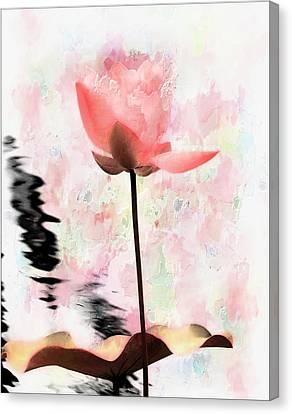 Pink Lotus Canvas Print by Carol Kinkead