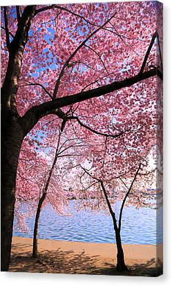 Pink Canvas Print by Mitch Cat