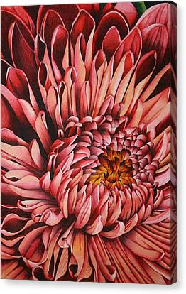 Pink Mum Canvas Print by Bruce Bley