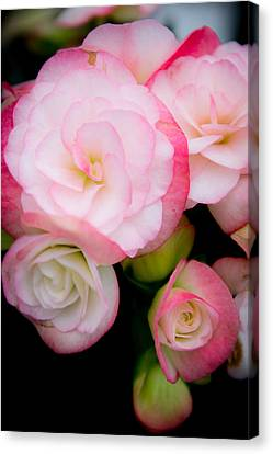 Pink Paradise 1 Canvas Print by Courtney DeGregorio