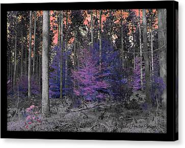 Canvas Print featuring the photograph Pink Sky by Michaela Preston