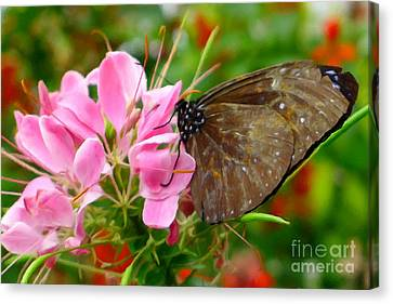 Pink Spider Flower With Butterfly Canvas Print by Lanjee Chee