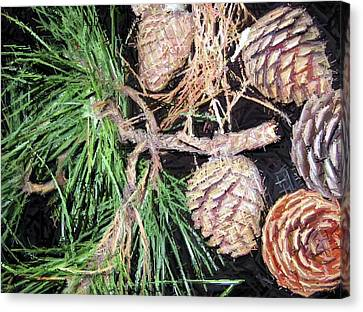 Pitch Pine Cone Canvas Print