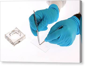 Placing Specimen Onto Microscope Slide Canvas Print