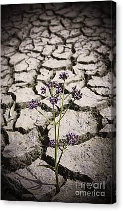 Courage Canvas Print - Plant Growing Through Dirt Crack During Drought   by Jorgo Photography - Wall Art Gallery
